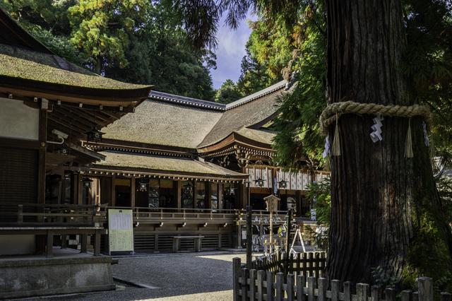 大神神社の拝殿と御神木