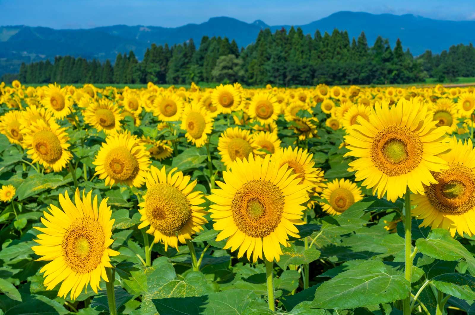 新潟県は広い