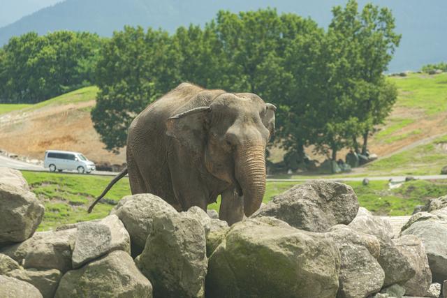 アフリカンサファリの象