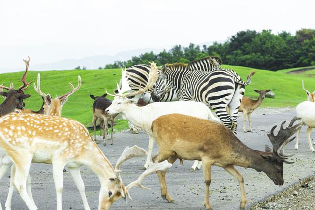 動物ゾーン(アフリカンサファリ・大分)