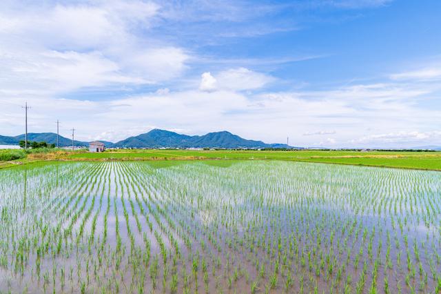 岡山の田んぼ