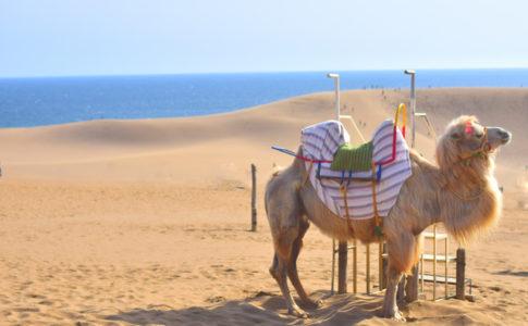 鳥取砂丘でラクダに乗る
