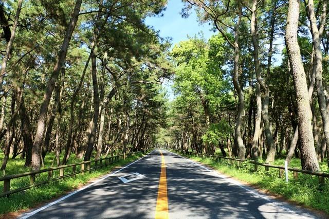 虹の松原に通る道路