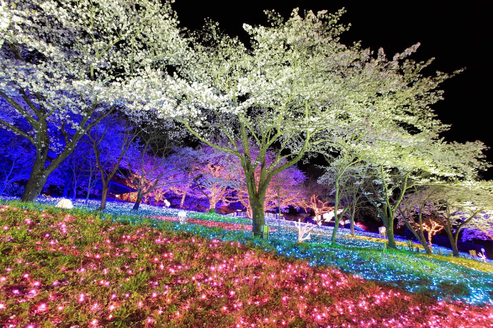 相模湖公園は、春には桜が非常に美しく