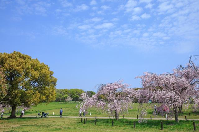 大仙公園(堺)