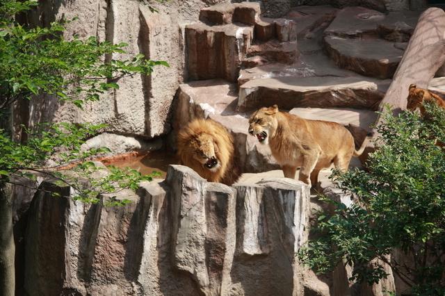 自然豊かな動物園