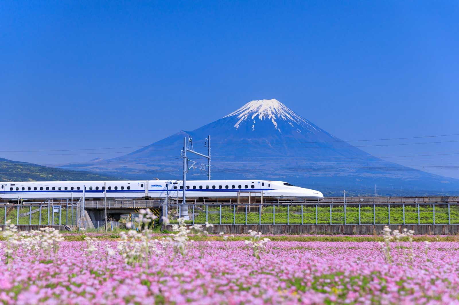 高校生までは静岡で過ごし