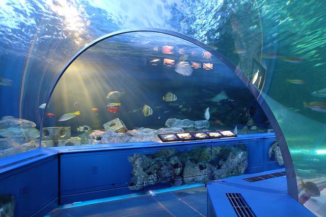 しながわ水族館・海底フロア