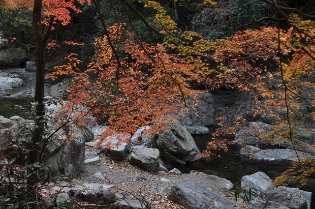 摂津峡公園の紅葉(秋)