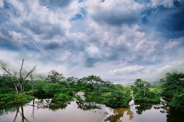 栃木の自然(沼ッ原湿原)