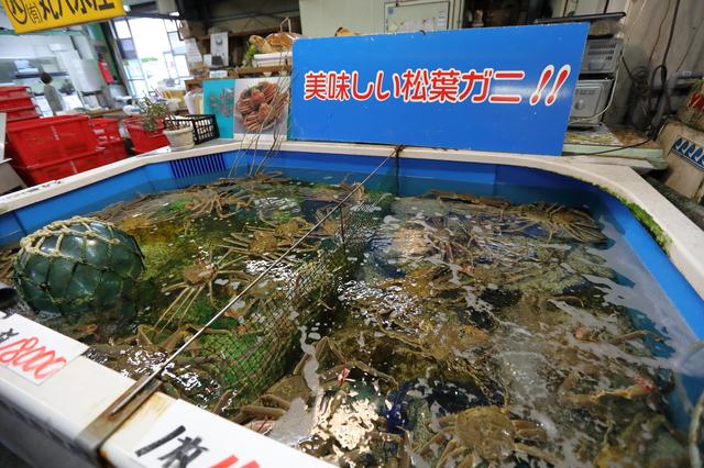 境港さかなセンター(鳥取)