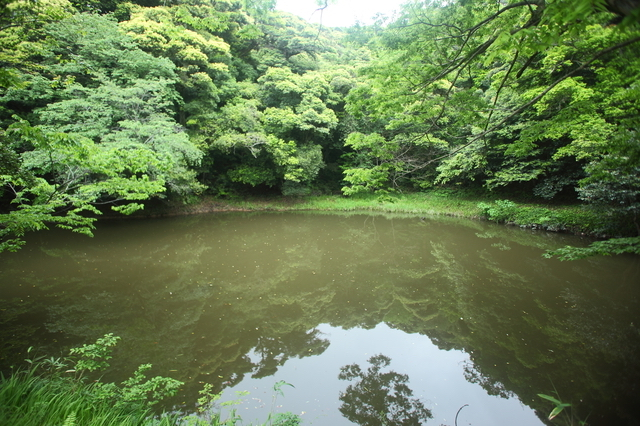 白兎神社の御身洗池