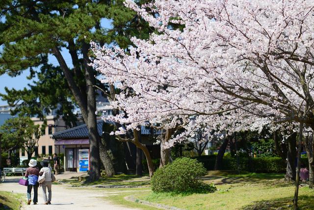 春の湊山公園