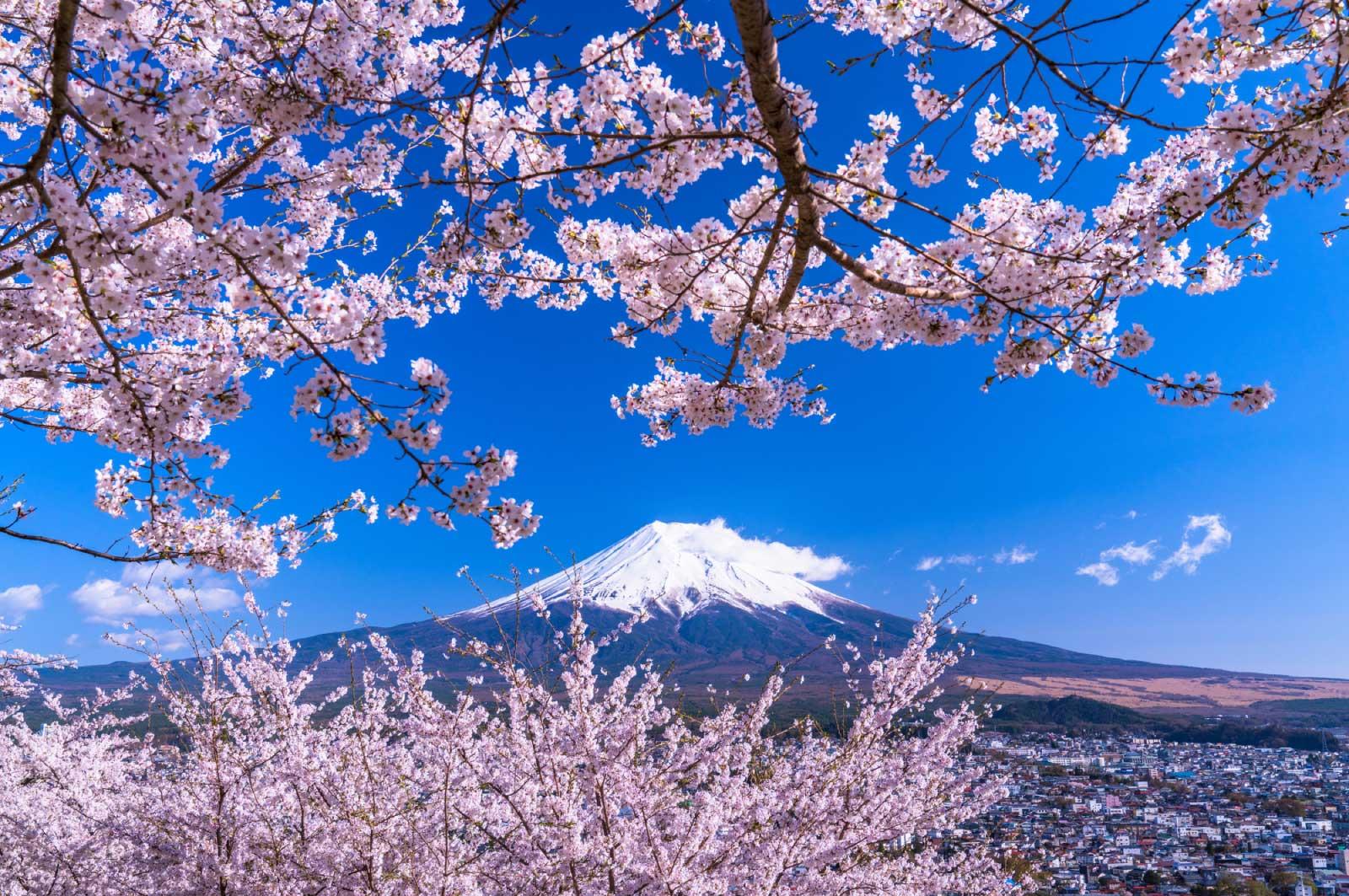 富士山などは日本中で有名な世界遺産