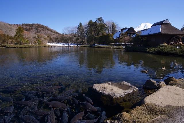 忍野八海の湧水は富士山からのもの