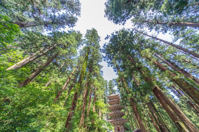 羽黒山五重塔の森