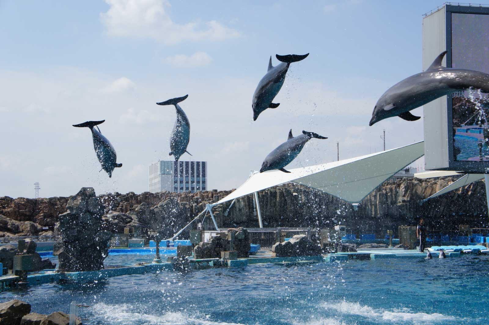 名古屋港水族館のイルカとシャチのショー