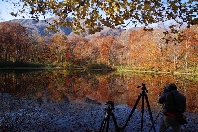 カメラで紅葉を撮影