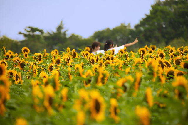 夏の世羅高原農場