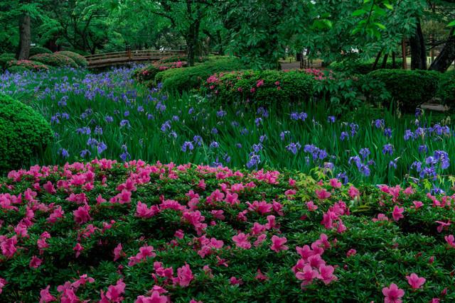 兼六園の花