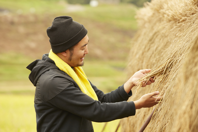 石川で米の収穫をする男性