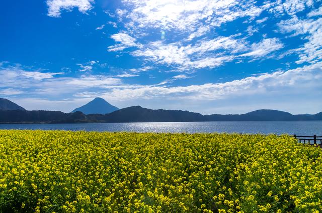 池田湖と菜の花畑
