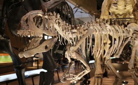 自然史部門では恐竜をはじめとした様々な生物が展示