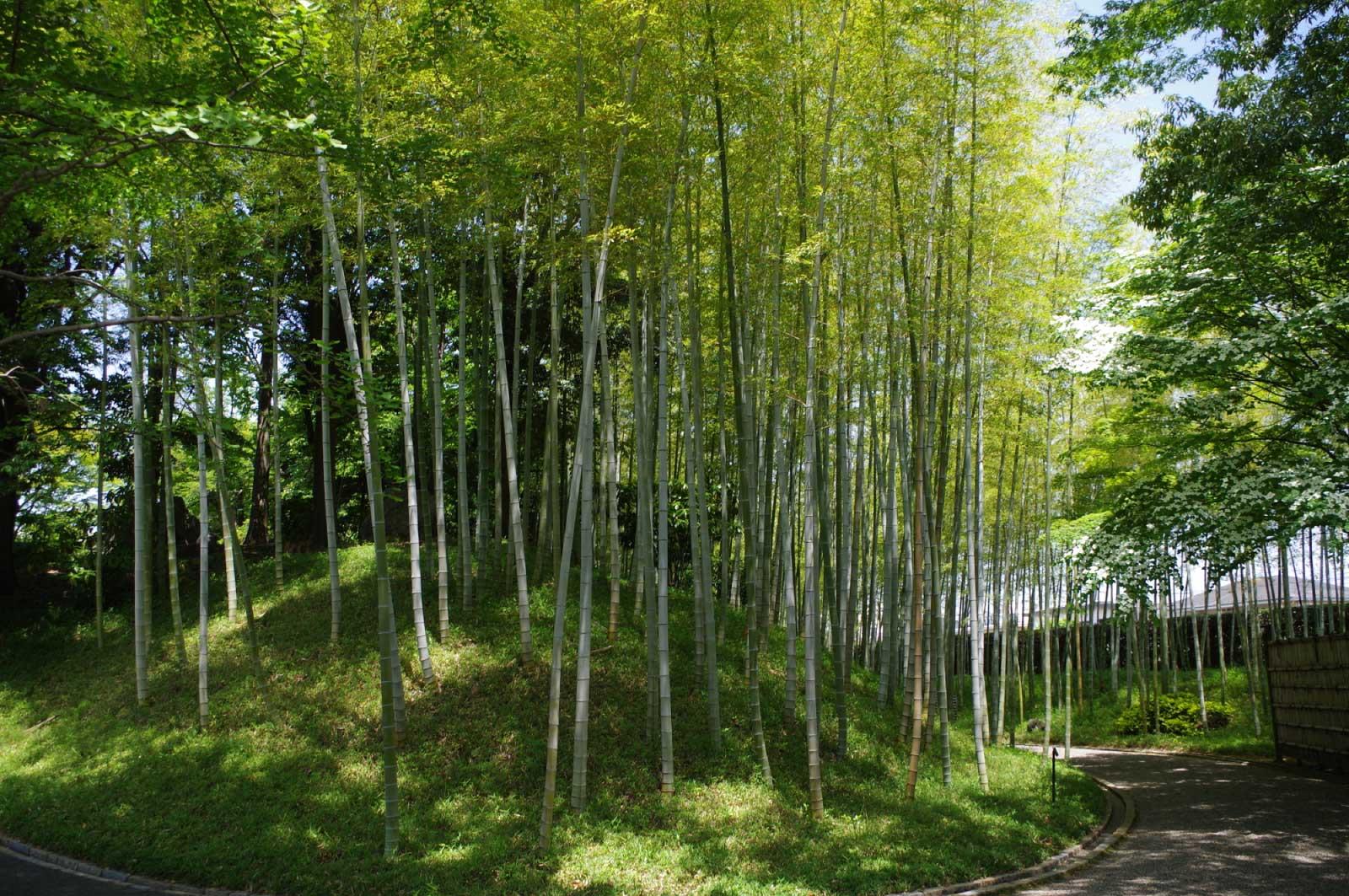 園内には1,400本もの木が植えられている