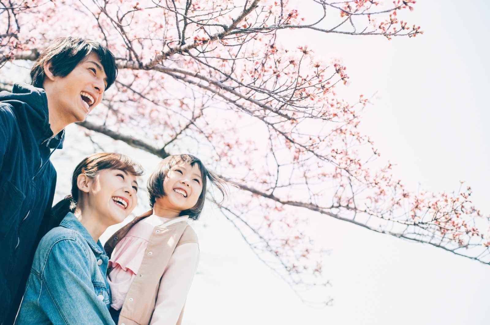 日本人にとって桜はとても思い入れのある花
