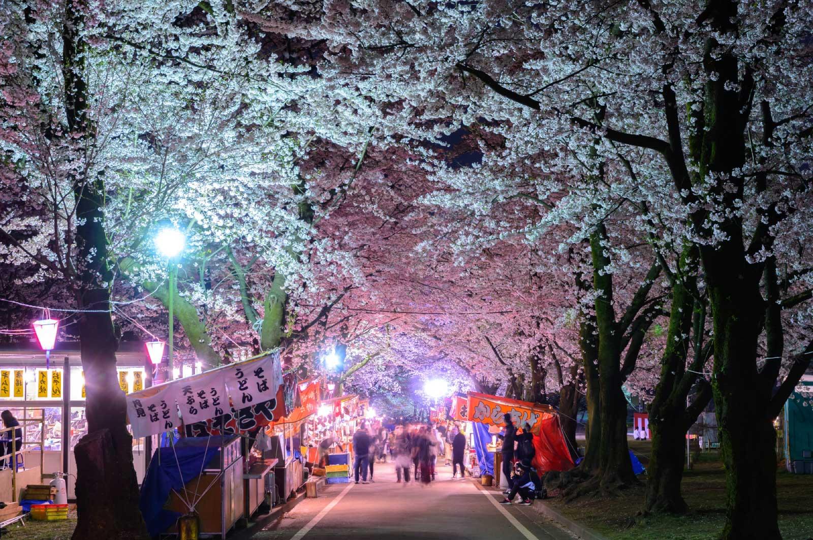 前橋を代表する桜イベント