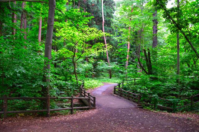 円山原始林