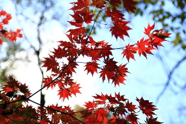 栃木の紅葉