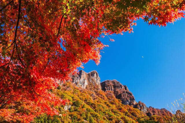 上毛三山の紅葉