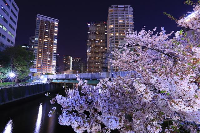 ライトアップされた目黒川の桜