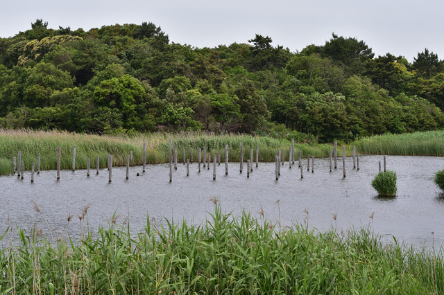 鳥類園の池