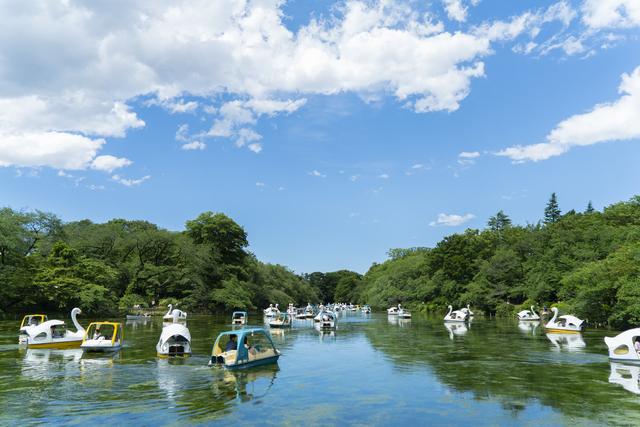 井の頭公園(ボート)