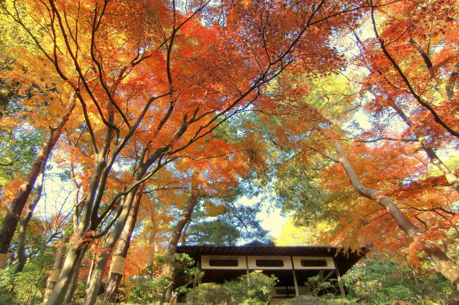 秋の殿ヶ谷戸庭園
