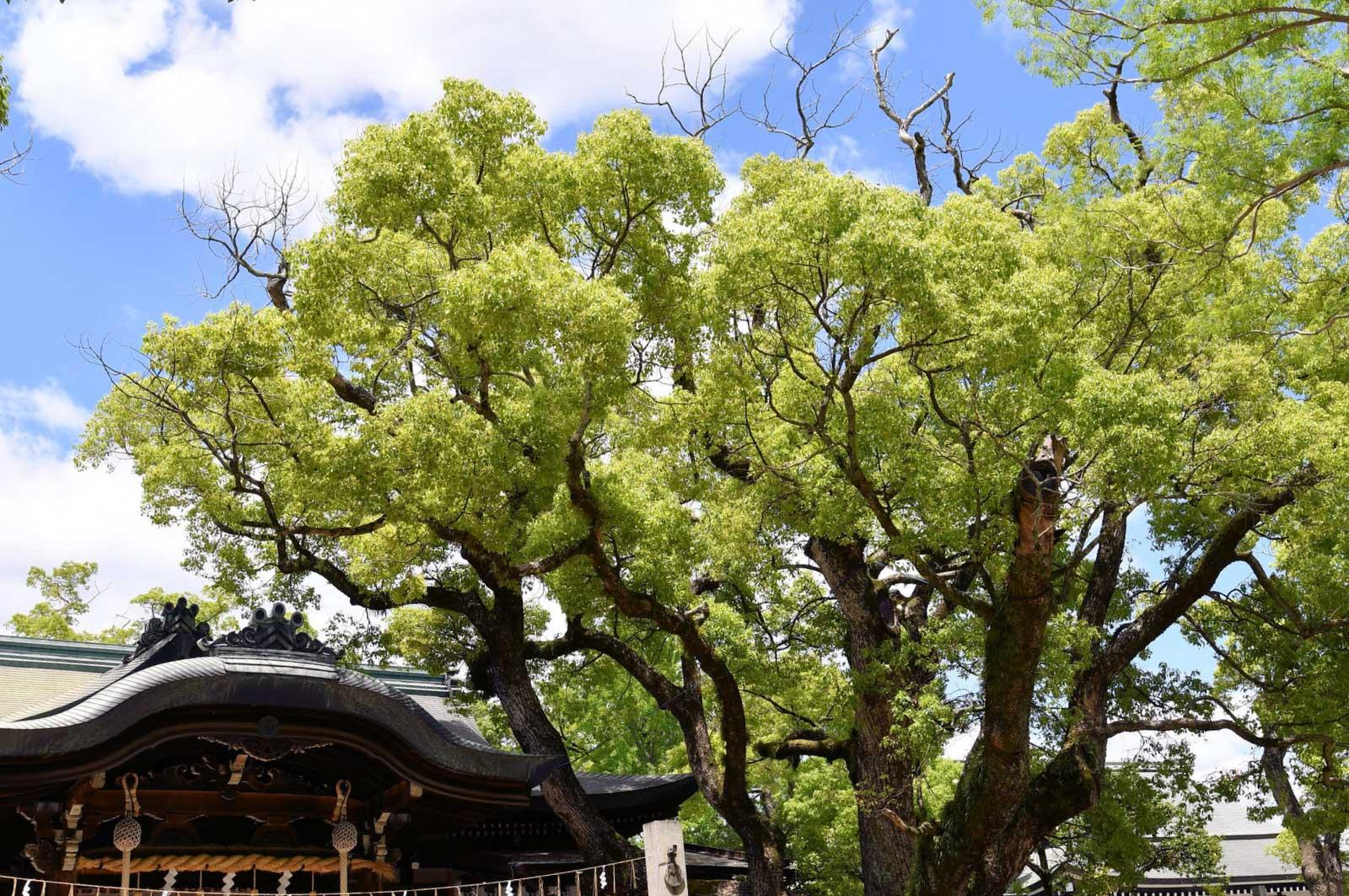 石切神社と御神木