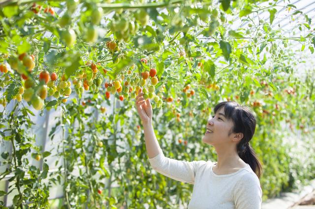 ワンダーファームでトマト狩り