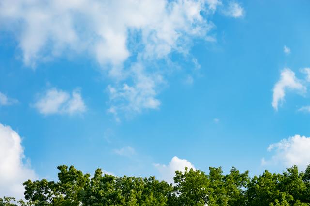 手賀の丘公園の森と空