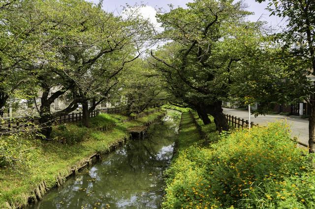 川越氷川神社の新河岸川