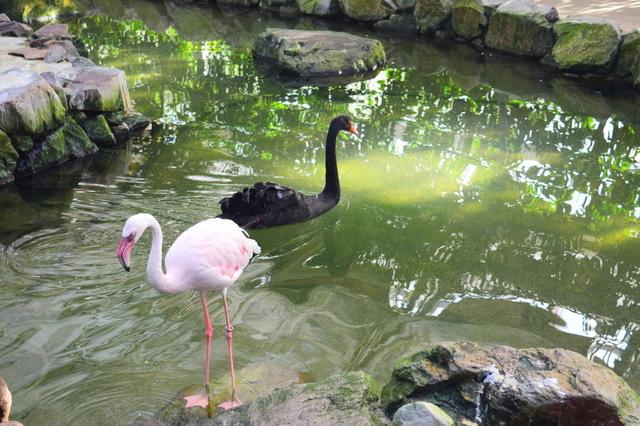 水鳥温室(松江フォーゲルパーク)