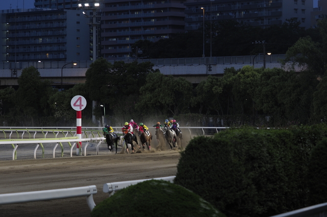大井競馬場(夜ケイバ)
