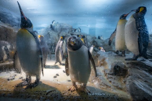 豊橋のんほいパークのペンギン