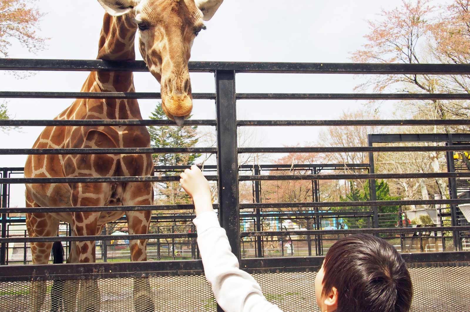 宇都宮動物園のキリン