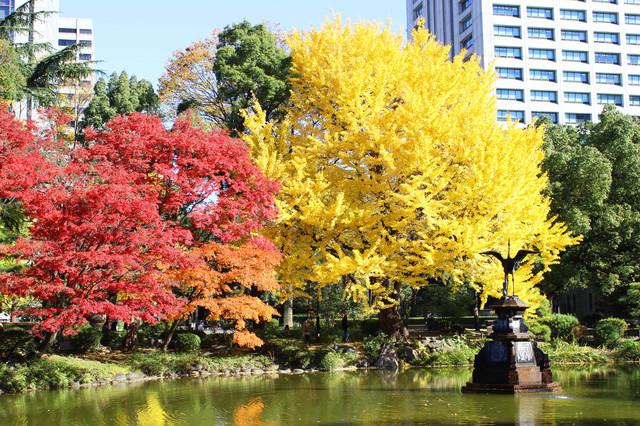 紅葉の日比谷公園(鶴の噴水前)