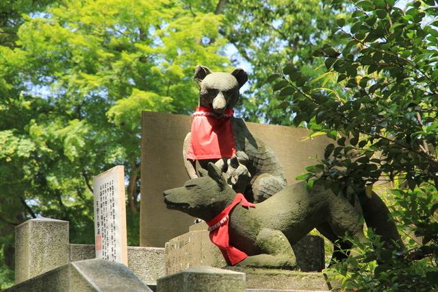白笹稲荷神社の境内にいた狐