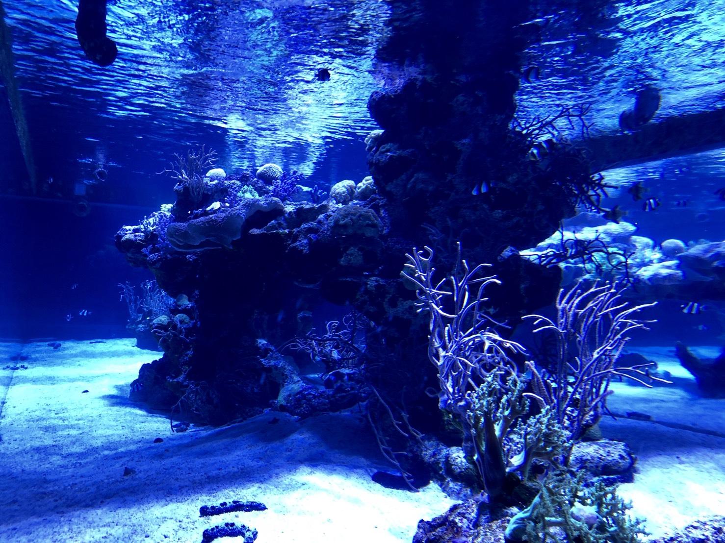 深海系水槽(すみだ水族館)
