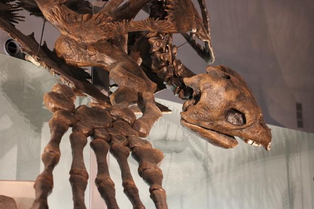 巨大ウミガメの化石