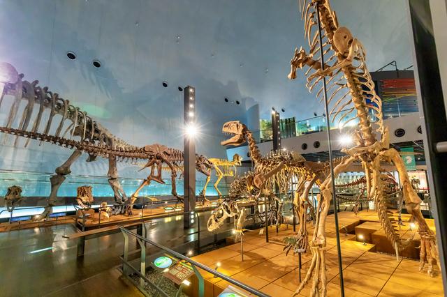 全身骨格の展示物(福井県立恐竜博物館)